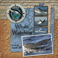 Monday 11 November - Whale Watching