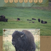 Wildlife in Yellowstone [page 1]