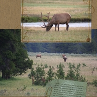 Wildlife in Yellowstone [page 2]