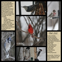 Great Back Yard Bird Count