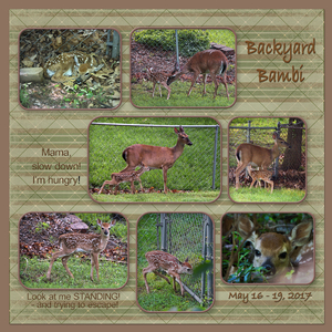 593d9f252d08f_BackyardBambi.jpg