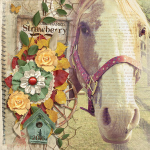 Aug--Club_2017_A-Horse-Named-Strawberry.PamelaZ.jpg