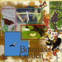 Butterflies---Birds---Dragonflies.jpg