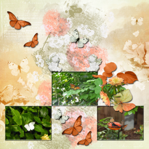 Butterflies-at-the-Zoo.png