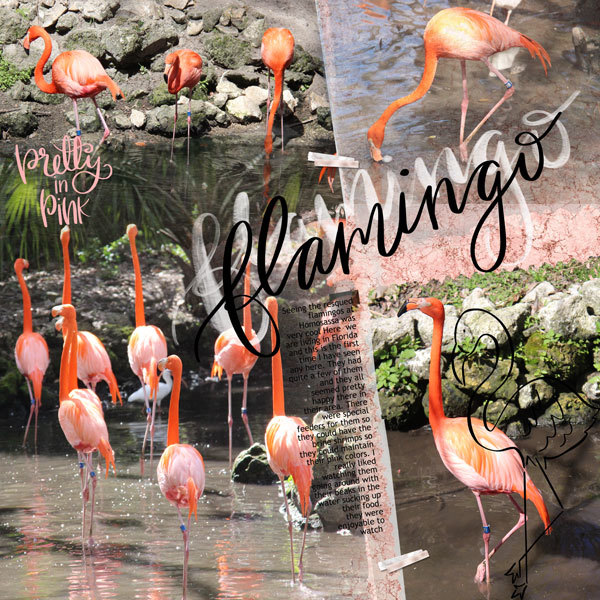 Bird-challenge-Flamingos
