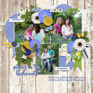 Pictures in the Bluebonnets