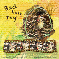 Weekend Challenge 4/21/18 No People - Bad Hair Day!