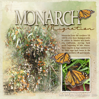 Monarch Migration  WW