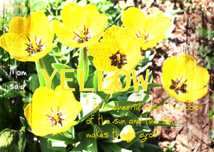 May-ATC-Yellow-1