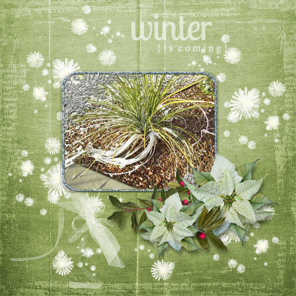 A Touch of Winter1