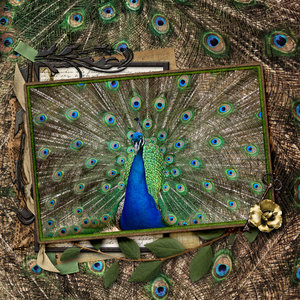 March Challenge #2: Austin Peacock