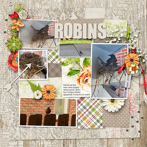 Robins (mood board)