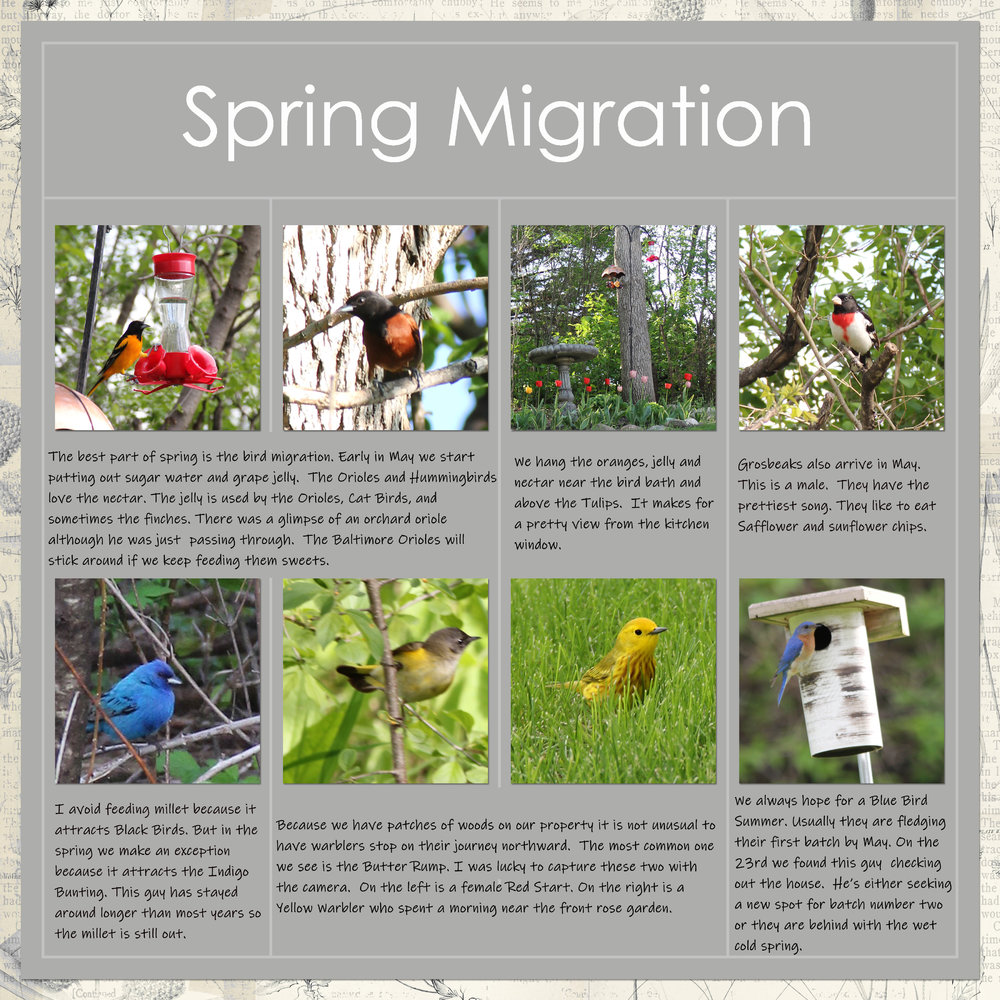 May Project Life - Birding Migration