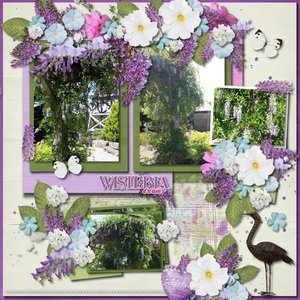 Wisteria Dreams
