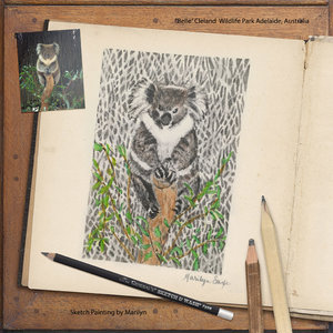 Tuesday Challenge 8/20/19 Zoo: Koala Sketch