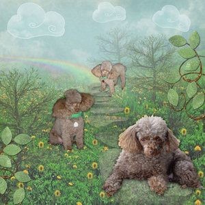 SilviaRomeo: Rainbow Bridge