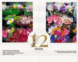 Project life week 12a