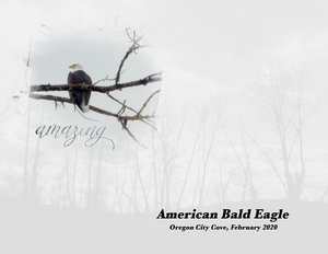March-24-weekly-challenge-Bald-Eagle