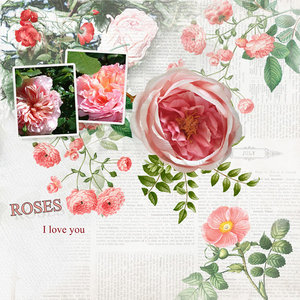 Roses, I love you