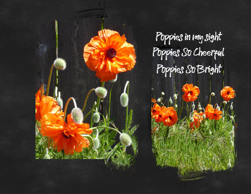 Poppies-2-web.jpg