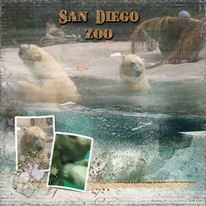 wt_layout8_SanDiegoZoo_PolarBears