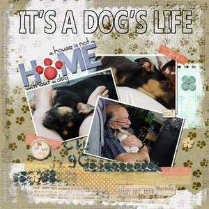 AFT Challenge It's a dogs life web.jpg