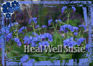get-well-susie