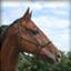 scrap_horse