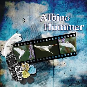 Dec. 21 - Albino Hummer