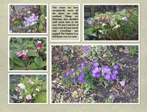 Lynne's Garden Feb 2015