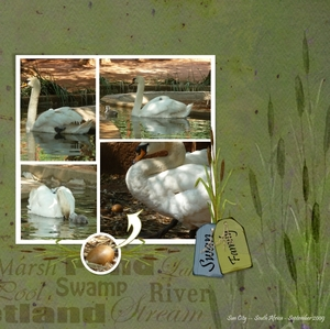 Enjoy Nature - the swan family Right