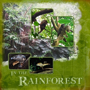 Rainforest, left