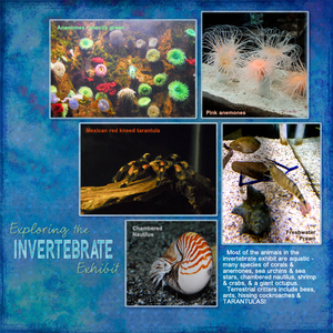 Exploring Invertebrates, right