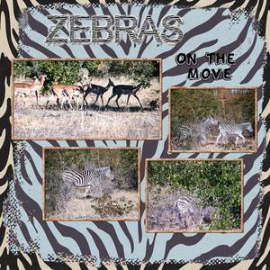 Zebras left 600