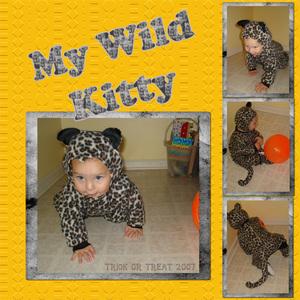 My Wild Kitty