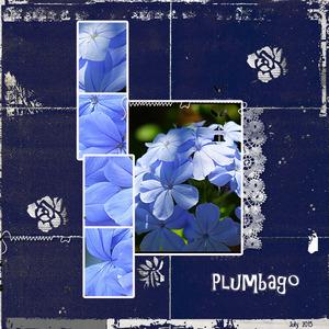 Plumbago