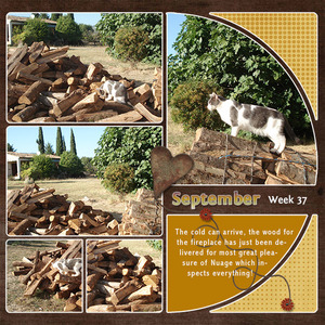 New firewood