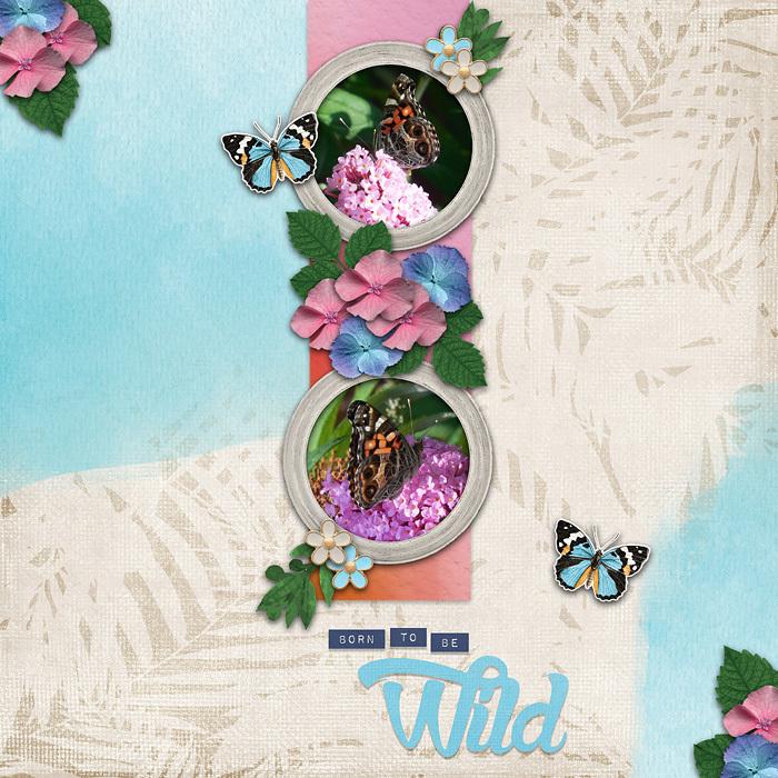 Butterfly Dreams.jpg