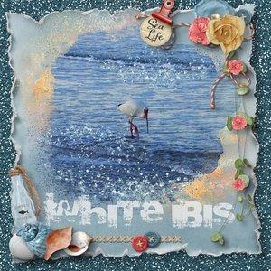 Shoreline White Ibis