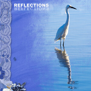 newsletter---reflections