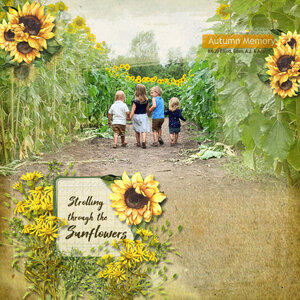 Strolling Through the Sunflowers