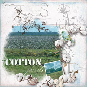 CWX_The-Cotton-Story
