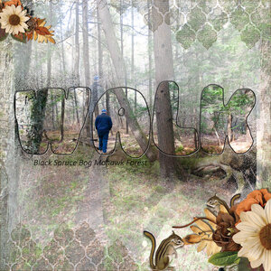 Walk in the Spruce Bog.