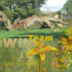 Wild Team