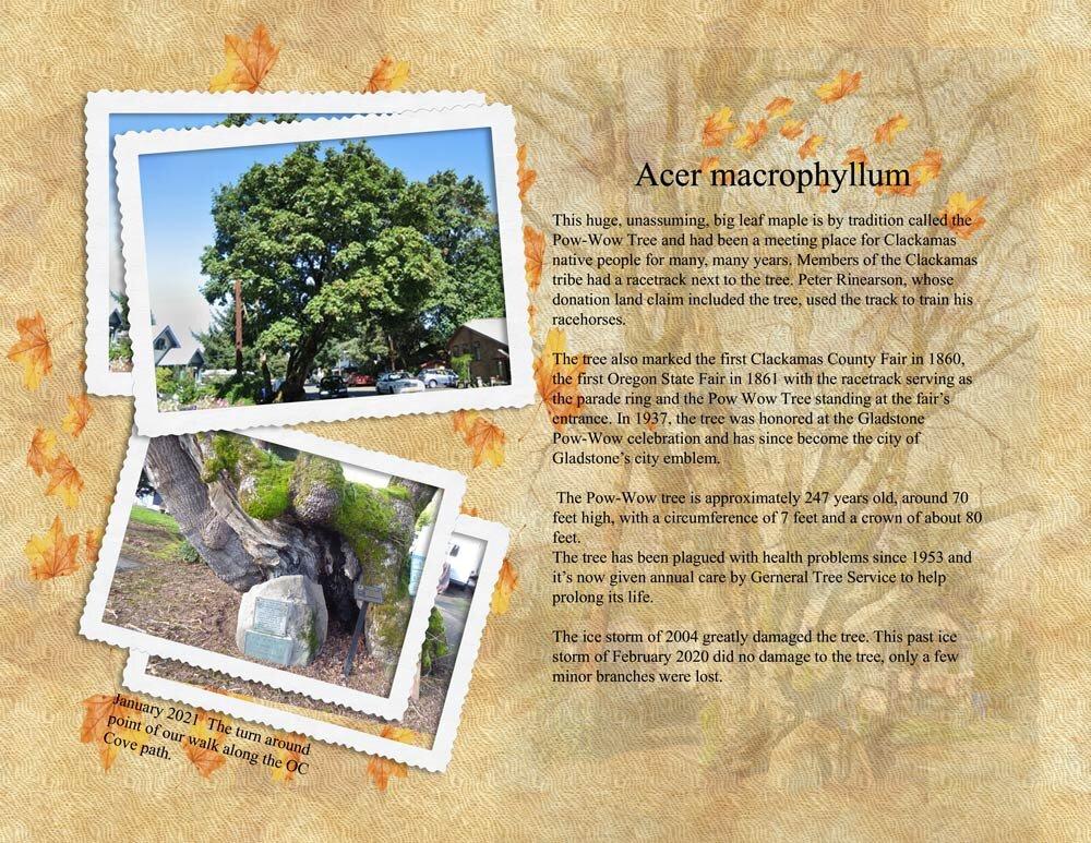 Pow-Wow-Tree
