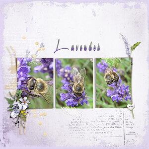 Lvender