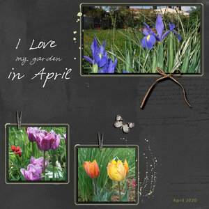 My Garden In April