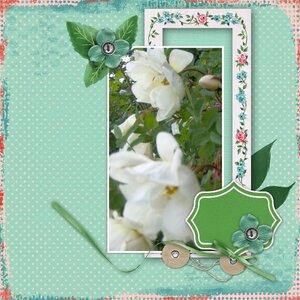Midsummer roses (Color challenge)