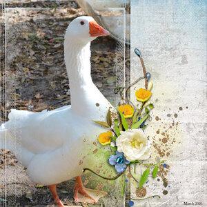 Goosey, Spring 2021