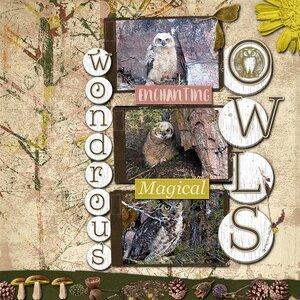 WONDROUS OWLS.jpg